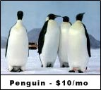 Sign Up for the Penguin Website Hosting Plan Today!